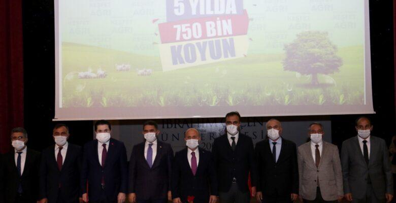 Ağrı'da çiftçilere 750 bin koyun dağıtılacak