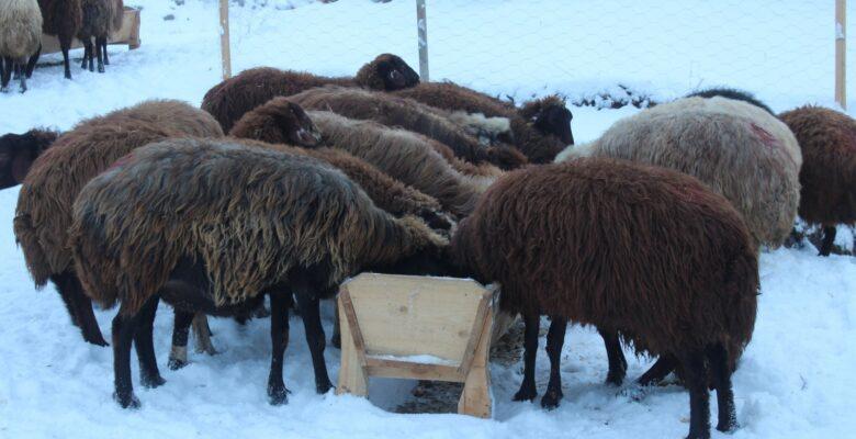 Ağrı'da çiftçilerin kış mesaisi başladı