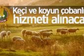 Çobanlık Hizmeti alınacaktır