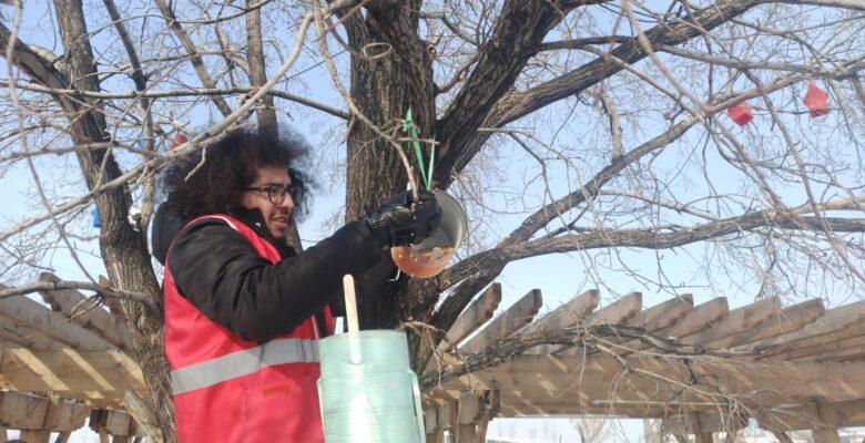 Türk Kızılay'ın gönüllü gençleri yaptıkları yuvalarla kuşları soğuktan koruyor